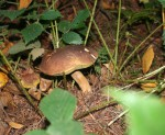 champignons 300
